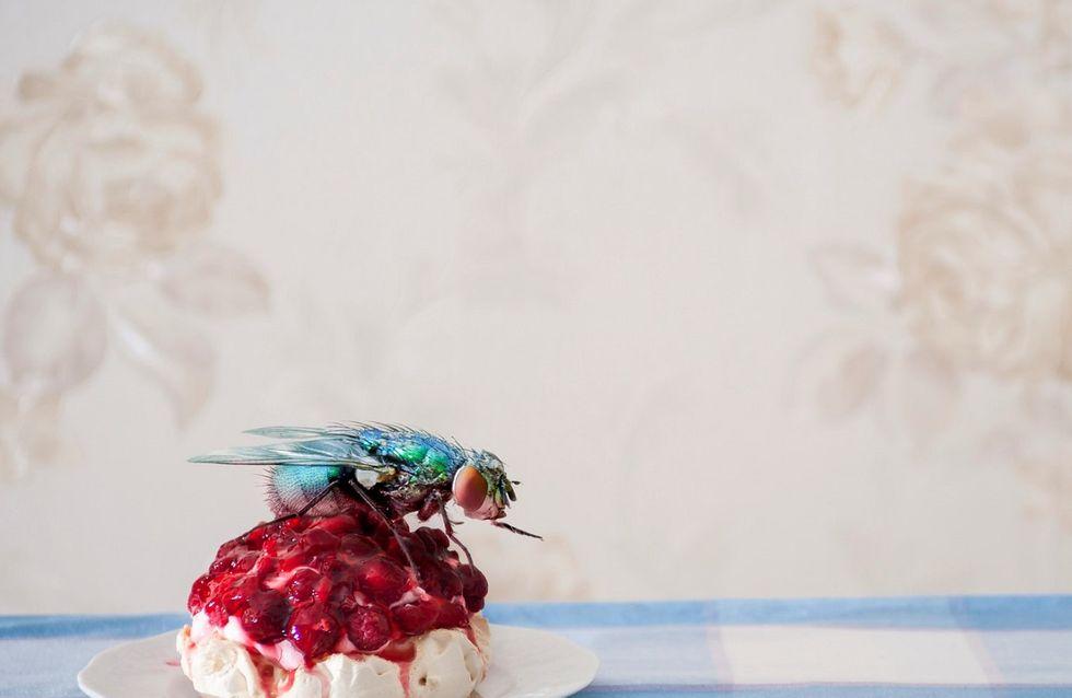 Sognare insetti: cosa significa secondo l'interpretazione dei sogni?