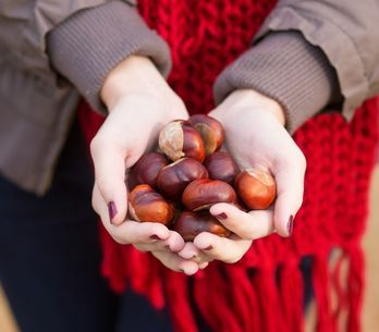 Castagne: proprietà, benefici per la salute e valori nutrizionali di frutto e fa