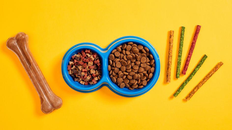 Hochwertiges Hundefutter: So ernährt ihr eure Vierbeiner richtig