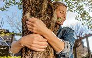 Sylvothérapie : et si on pouvait réduire son stress en forêt (et en câlinant des