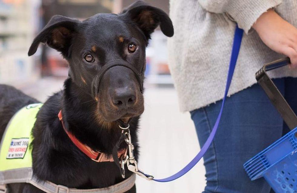 Refoulée à cause de son chien d'assistance, elle alerte sur cette situation fréquente