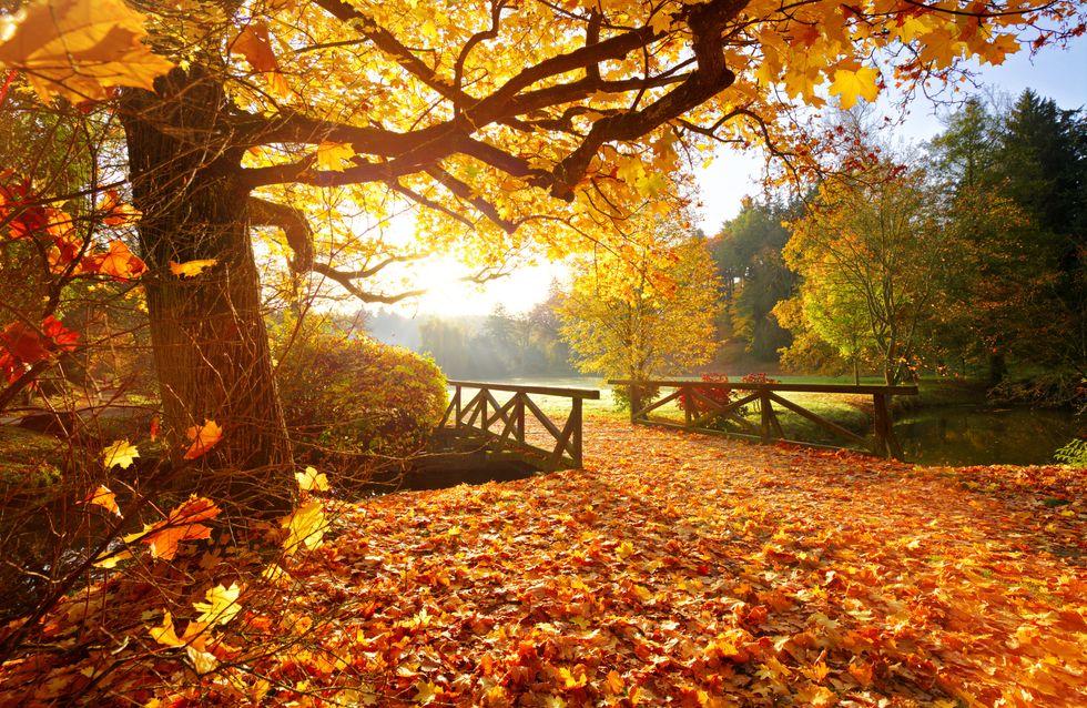 Foliage: che cos'è e dove ammirare i colori delle foglie autunnali