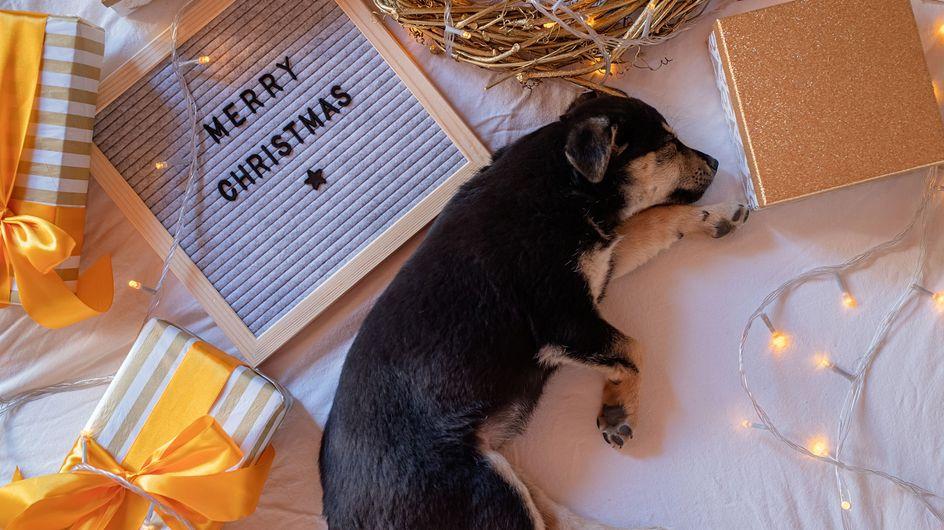 Merry Woofmas! Die besten Hunde-Adventskalender 2020