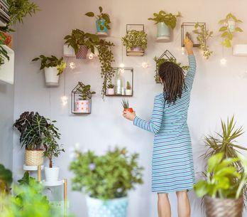 Piante da appartamento resistenti: guida sempreverde per negate