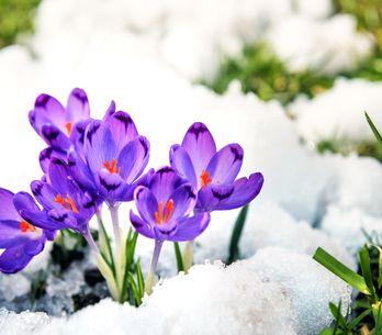 Piante invernali: le 10 più belle per colorare il tuo giardino