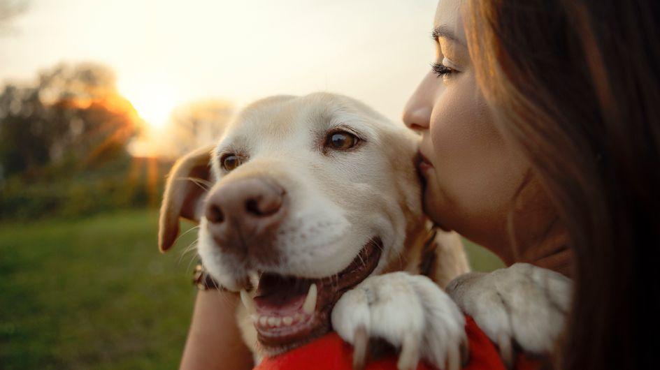 Voici enfin la bonne méthode pour calculer l'âge de votre chien !