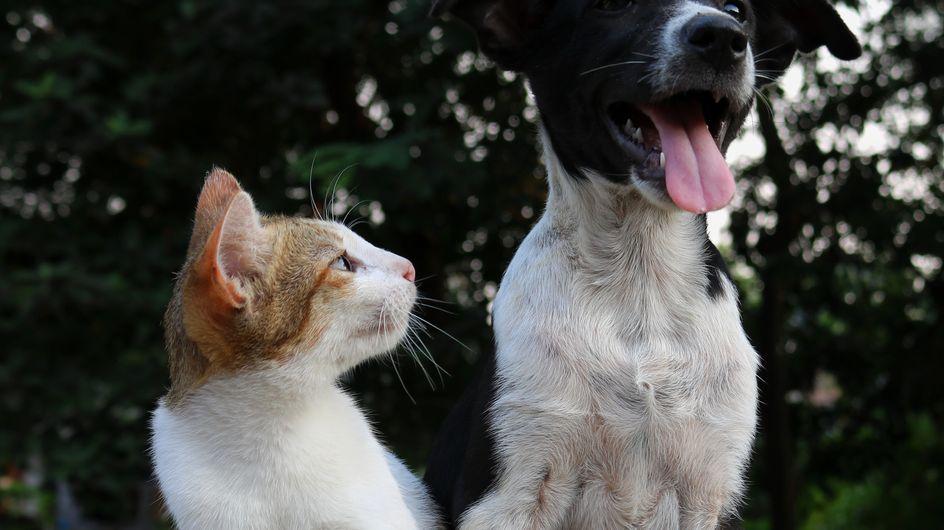 Test: quale animale domestico è perfetto per te?