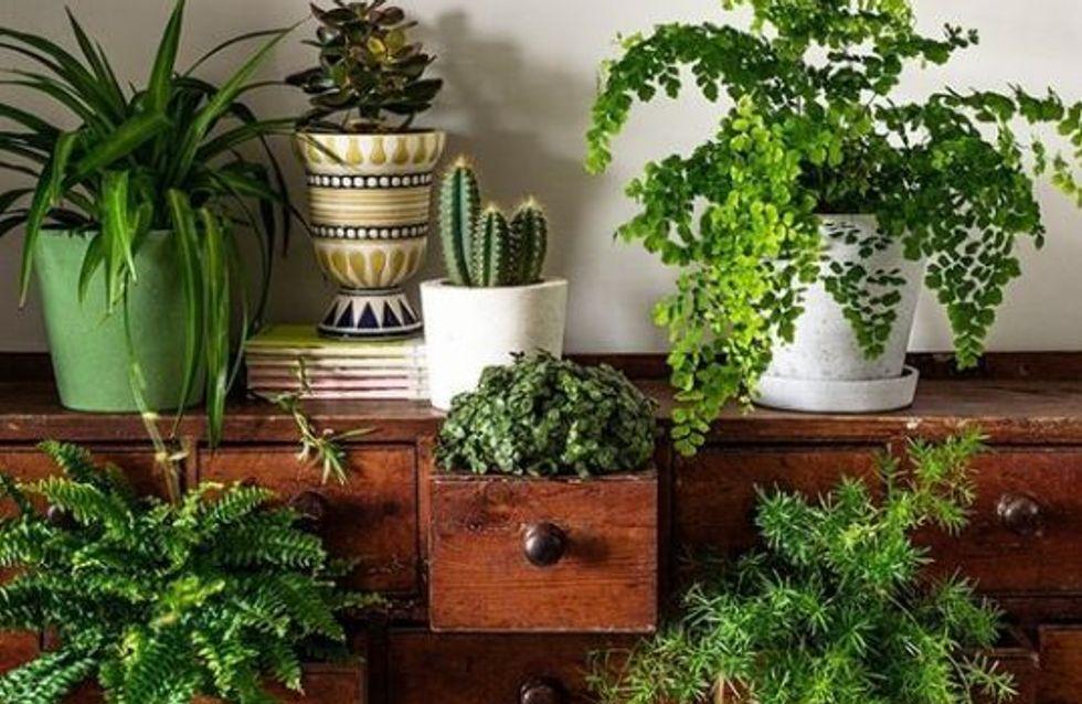 Arredare con le piante: scopri le tipologie più indicate per ogni ambiente!