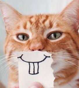 Le saviez-vous ? Ces 10 choses que les chats détestent