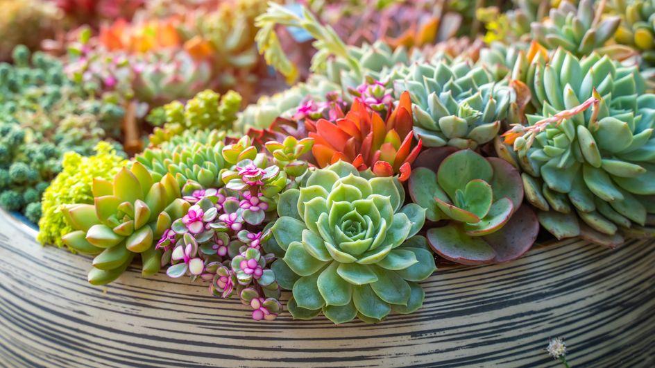 Piante grasse con fiori da esterno: le varietà migliori da scegliere