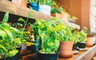 Potager d'intérieur : les meilleurs sites dédiés au jardinage urbain, le test et