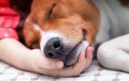 Pet therapy: che cos'è e quali sono i benefici della terapia con gli animali