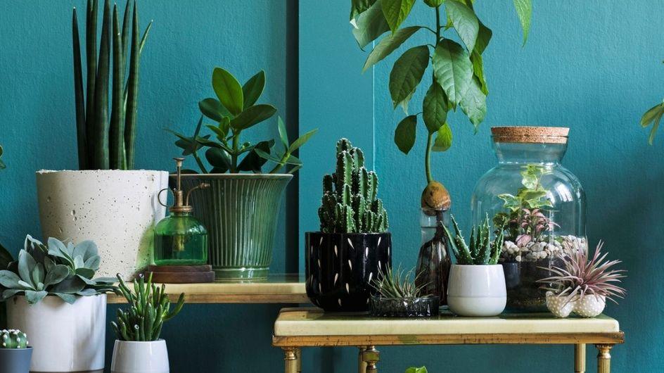 Tutte le piante da interno che sopravvivono anche con poca luce