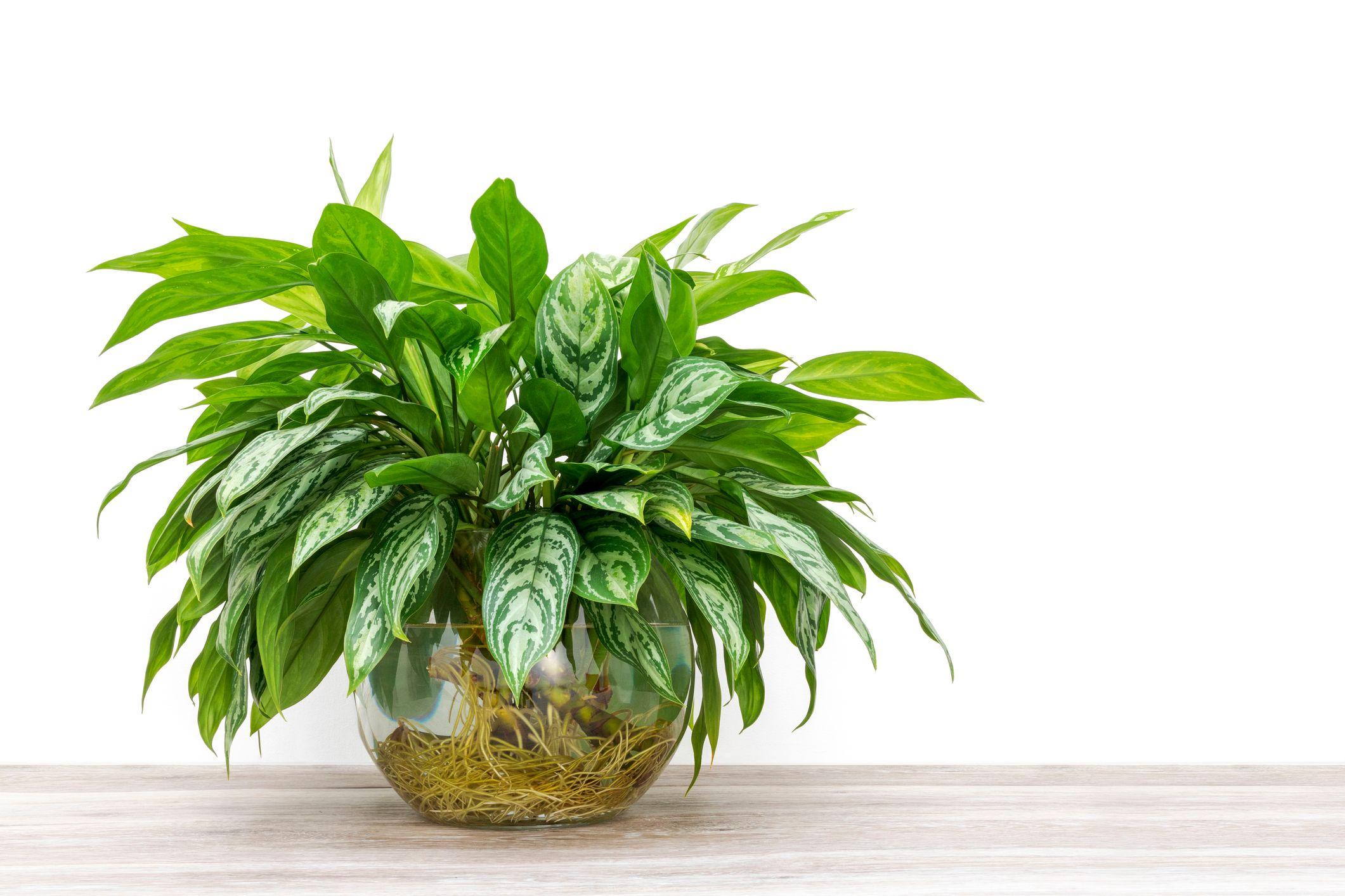 Tutte le piante da interno che sopravvivono anche con poca ...