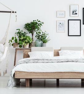 Piante per la camera da letto: quali preferire per dormire bene?