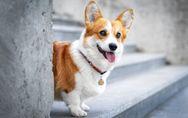 Hunde-Adoption in Corona-Zeiten: Viele Tierheime schlagen jetzt Alarm