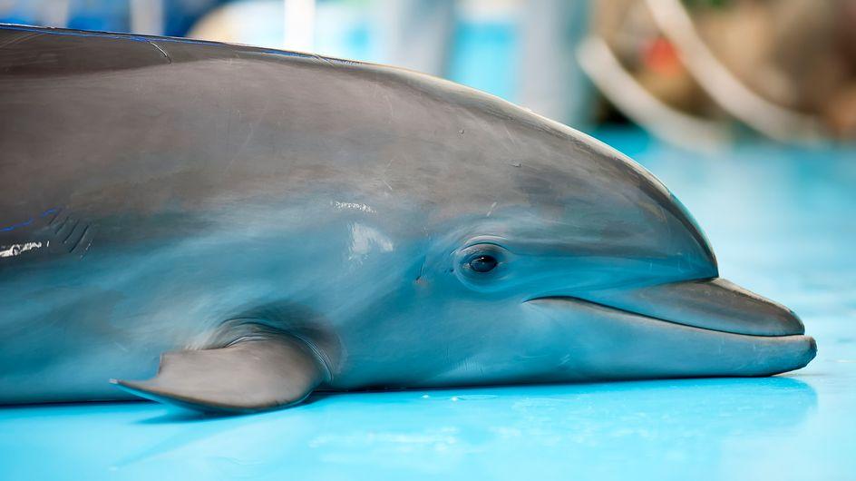 Le parc Astérix ferme enfin son delphinarium, mais ses animaux ne seront pas relâchés pour autant