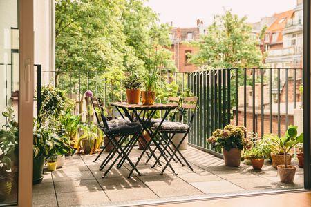 piante da terrazzo: esposizione a Sud