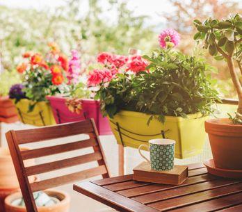 Piante da balcone pieno sole: ecco le caratteristiche per scegliere bene