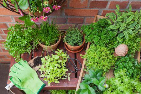 piante da terrazzo: piante aromatiche a Sud