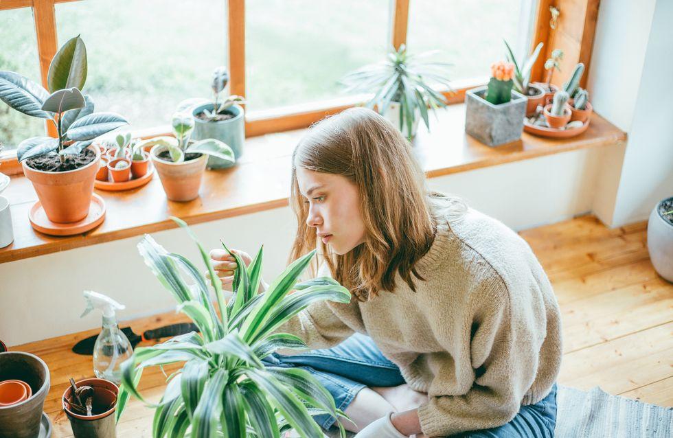 6 signes que votre plante est en mauvaise santé et comment la sauver