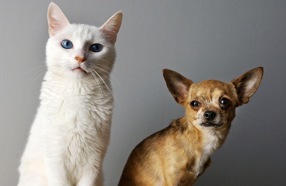 Coronavirus : chiens et chats pourront être testés en Corée du Sud