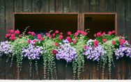 Piante da balcone perenni ricadenti: le migliori per decorare gli esterni!
