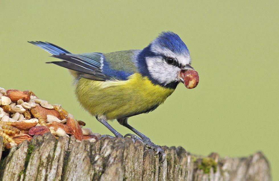 Vögel füttern: Das sind die 7 größten Fehler