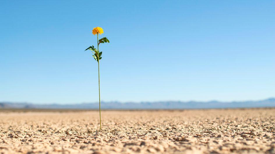 Le frasi più significative sulla resilienza