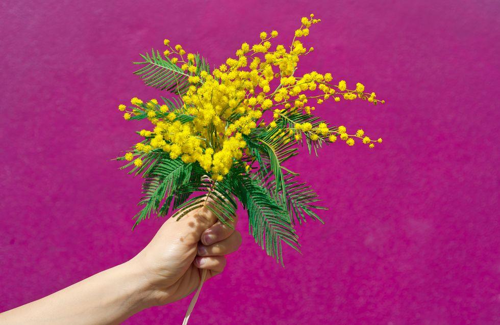 Mimose per la festa delle donne: perché sono il simbolo di questa giornata?