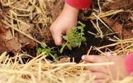 Test: quanto sei green? Scopri quanto sei ecosostenibile!