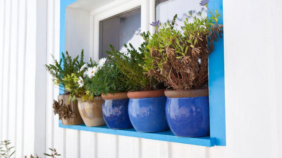 Plantes d'extérieur en pot : les 7 erreurs les plus fréquentes à éviter