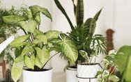 Quelle plante d'intérieur vous correspond le mieux ? Faites le test !