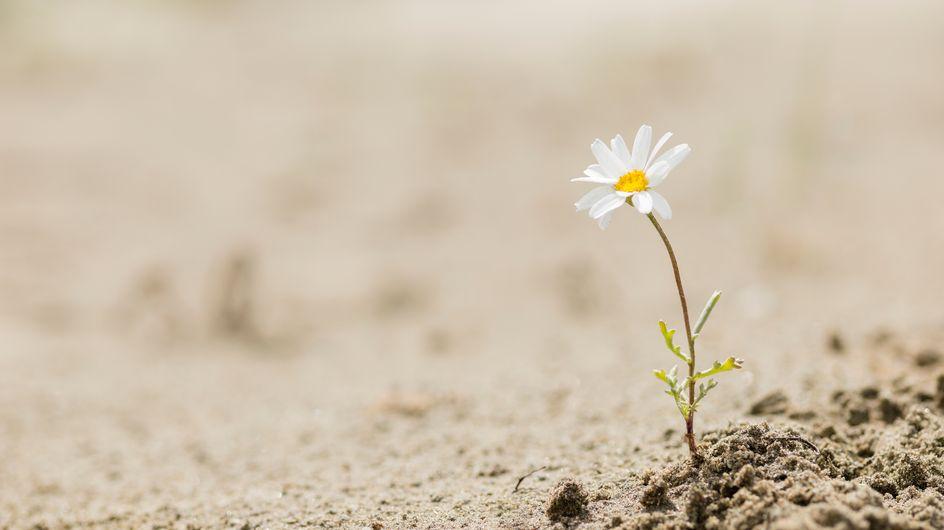 Resilienza: che cos'è e come migliorare questa capacità
