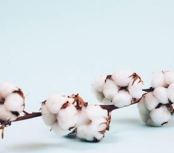 Baumwollhochzeit: Die schönsten Ideen zum 2. Hochzeitstag