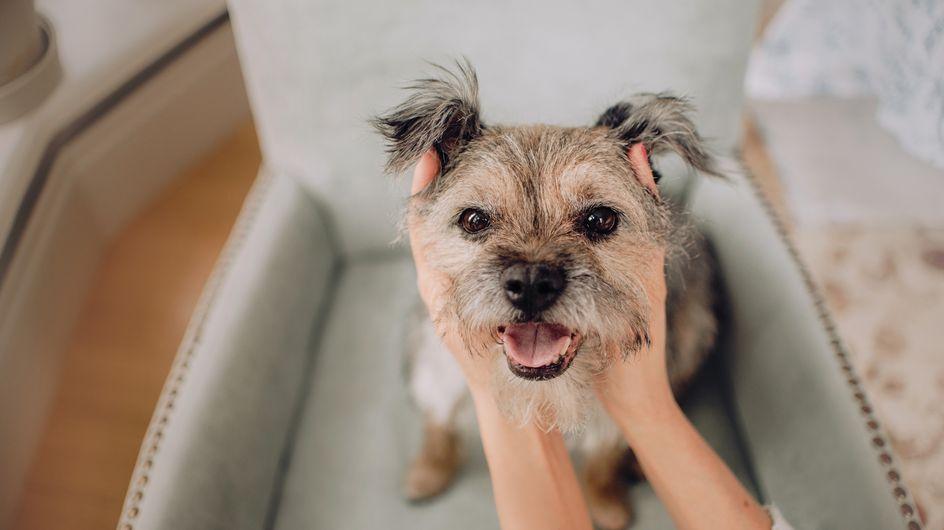 DNA-Test für Hunde: Welche Rassen verstecken sich in meinem Hund?