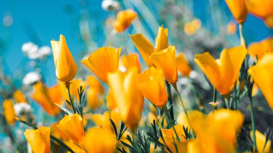 Test sulla personalità: che fiore primaverile sei?