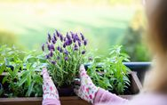 Piante da esterno resistenti al sole e al freddo: scopri quali sono!