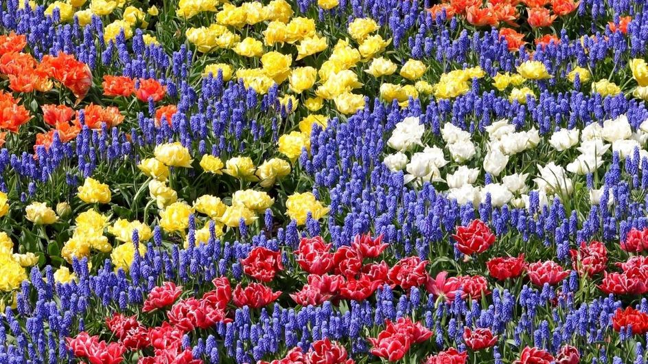 Test sulla personalità: che colore della primavera sei?
