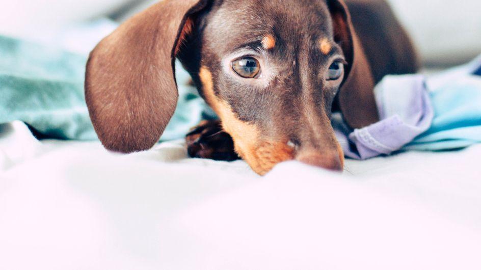 5 infos qui prouvent que l'amour des chiens est le plus pur au monde