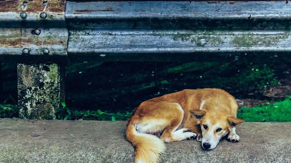 Cane abbandonato: come renderti utile se ne incontri uno per strada
