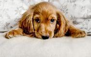 Micosi cane: possono esserci dei funghi dietro quelle chiazze senza pelo sulla p