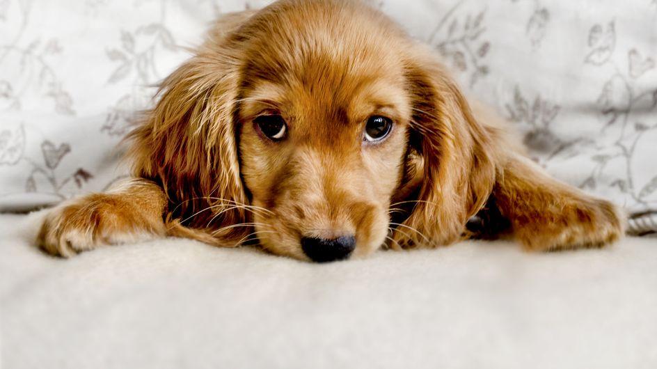 Micosi cane: possono esserci dei funghi dietro quelle chiazze senza pelo sulla pelle del nostro cane