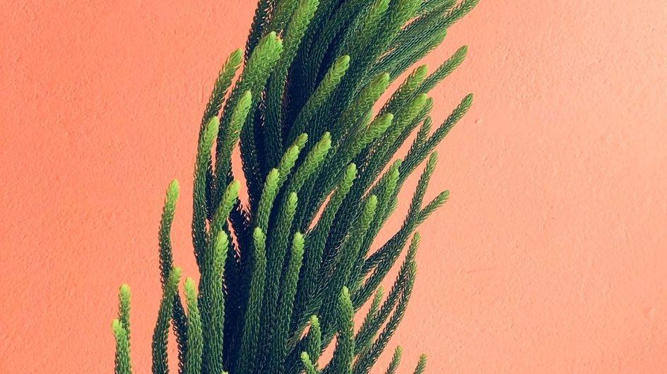 Test sulla personalità: che tipo di pianta curativa sei?