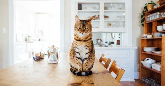 Votre chat réclame tout le temps à manger ? On a la solution