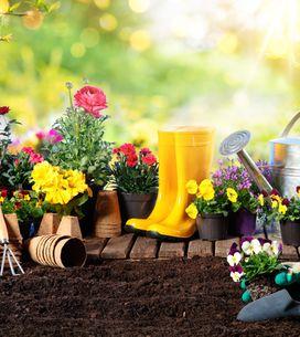 Piante fiorite da giardino: le migliori specie per decorare gli esterni di casa!