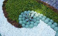 6 piante grasse da giardino che resistono tutto l'anno