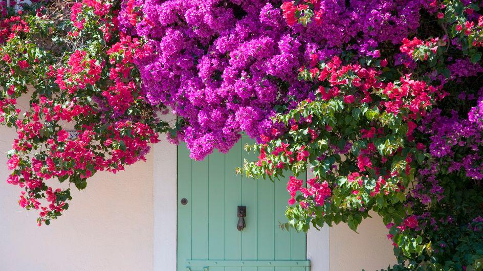 Piante rampicanti con fiori: le più belle della stagione primaverile