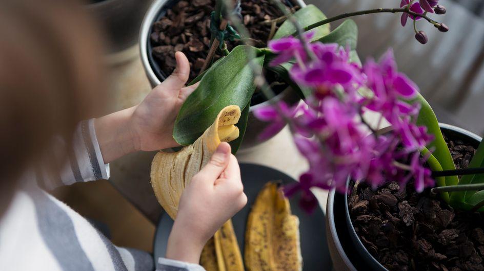Ne jetez pas la peau de votre banane, elle est excellente pour vos plantes !