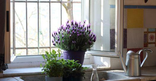 8 plantes faciles à vivre qui ne craignent pas la chaleur
